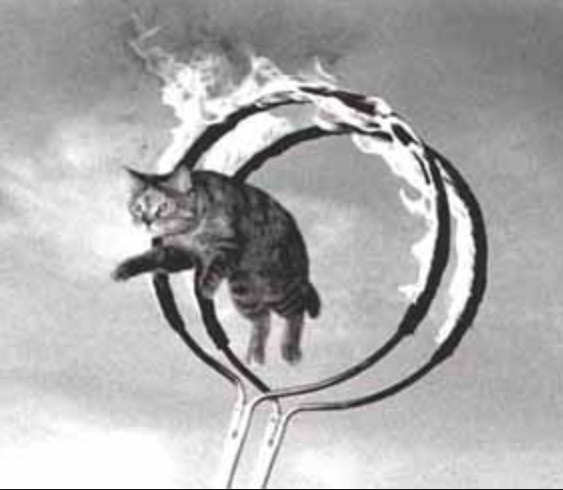 How To Get a Cat To Jump Through A Hoop