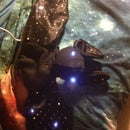 How to Make a Stuffed Bat Night Light With a Light Sensor Using Lilypad Arduino
