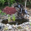 Backyard Pond and Waterfall: No Experience Necessary!
