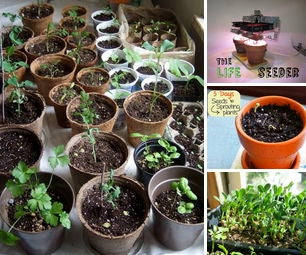 Seed Start Indoors