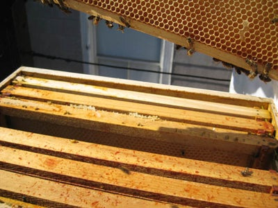 Honey Frame Inspection