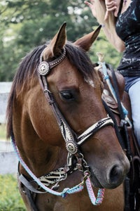 Putting on the Bridle