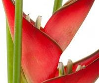 Tropical Plants and Plumeria Care in Temperate Climates