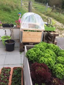 Small Greenhouse for Plantations on Euro Pallets