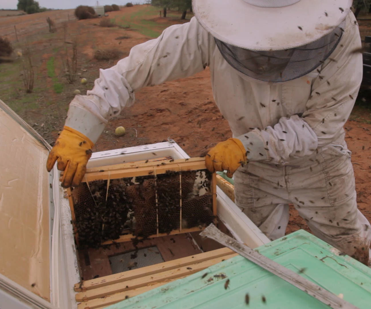 Building a Bee Hive Out of an Old Fridge