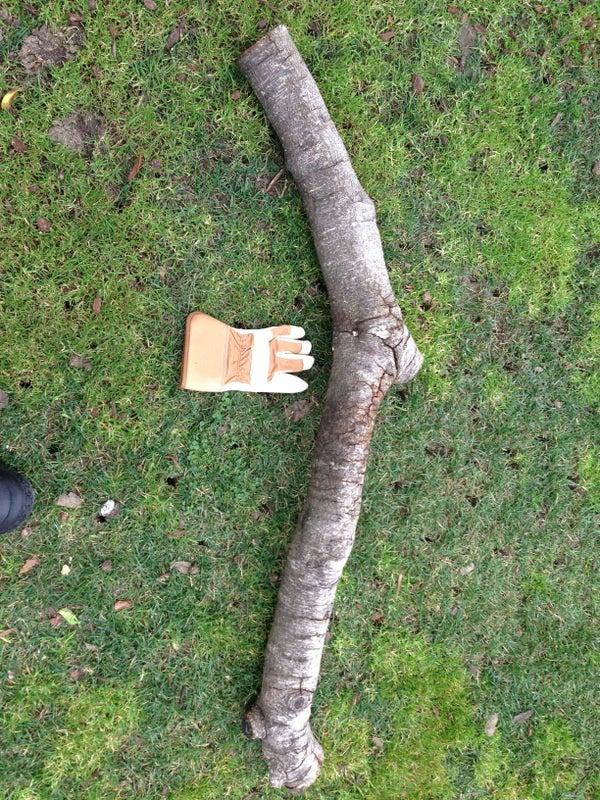 Making a Mushroom Log
