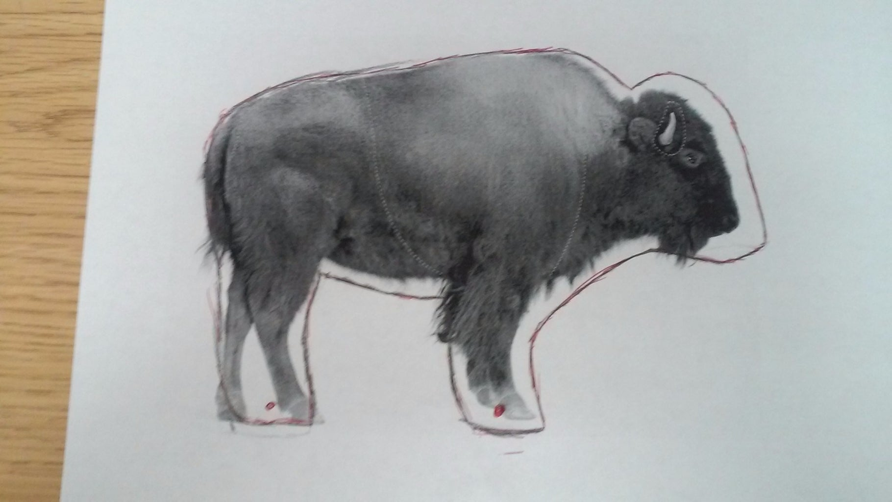Find a Picture of a Buffalo