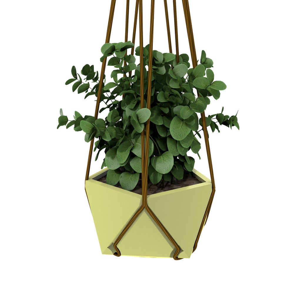 Planting and Hanging