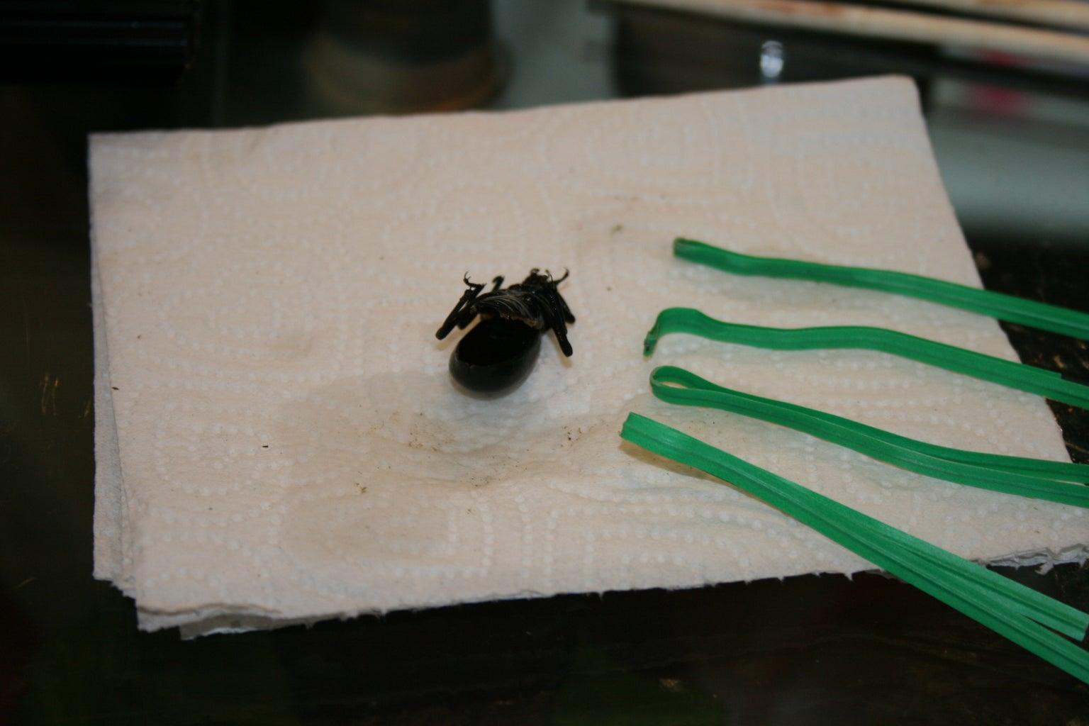 Empty Beetle