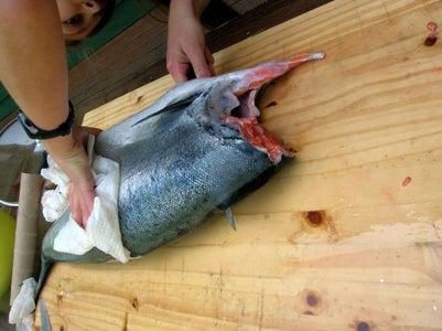 Preparing the Fish