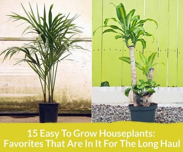 15 Easy to Grow Houseplants: Favorites That Are in It for the Long Haul