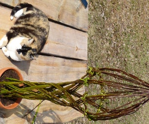 Living Willow Columns /  Sculptures