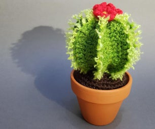 A Cuddly Cactus