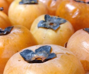 Harvesting, Processing, Cooking - Native Persimmon Bread