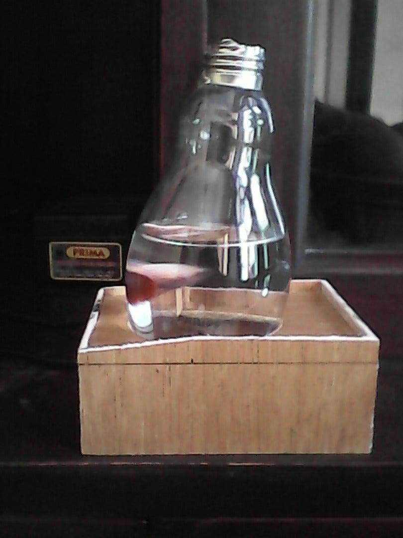 Homemade Mini Aquarium From Lamp Bulb