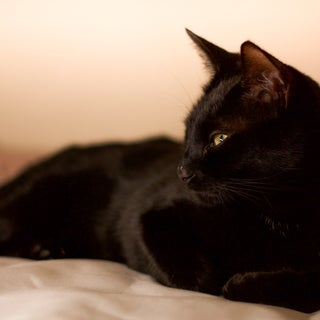 How to Photograph a Black Cat
