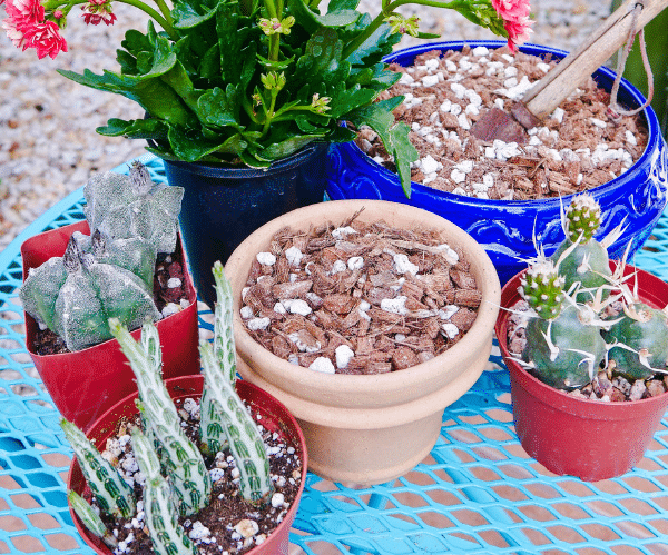 How to Make Soil Mix for Succulents & Cacti