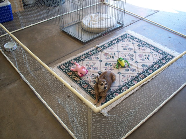 Small Pet - Quick Kennel
