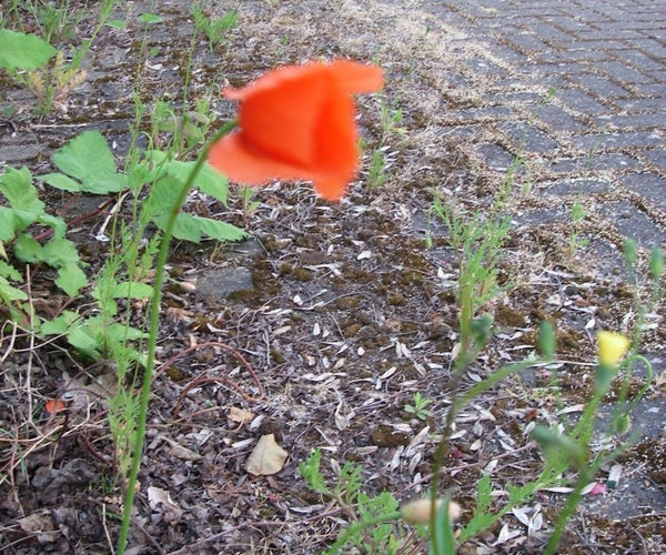 Leave a Trail of Flowers As You Cycle Through the Wastelands.(+ Bonus Material)