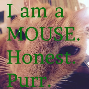 Turn Your Cat Into a Mouse