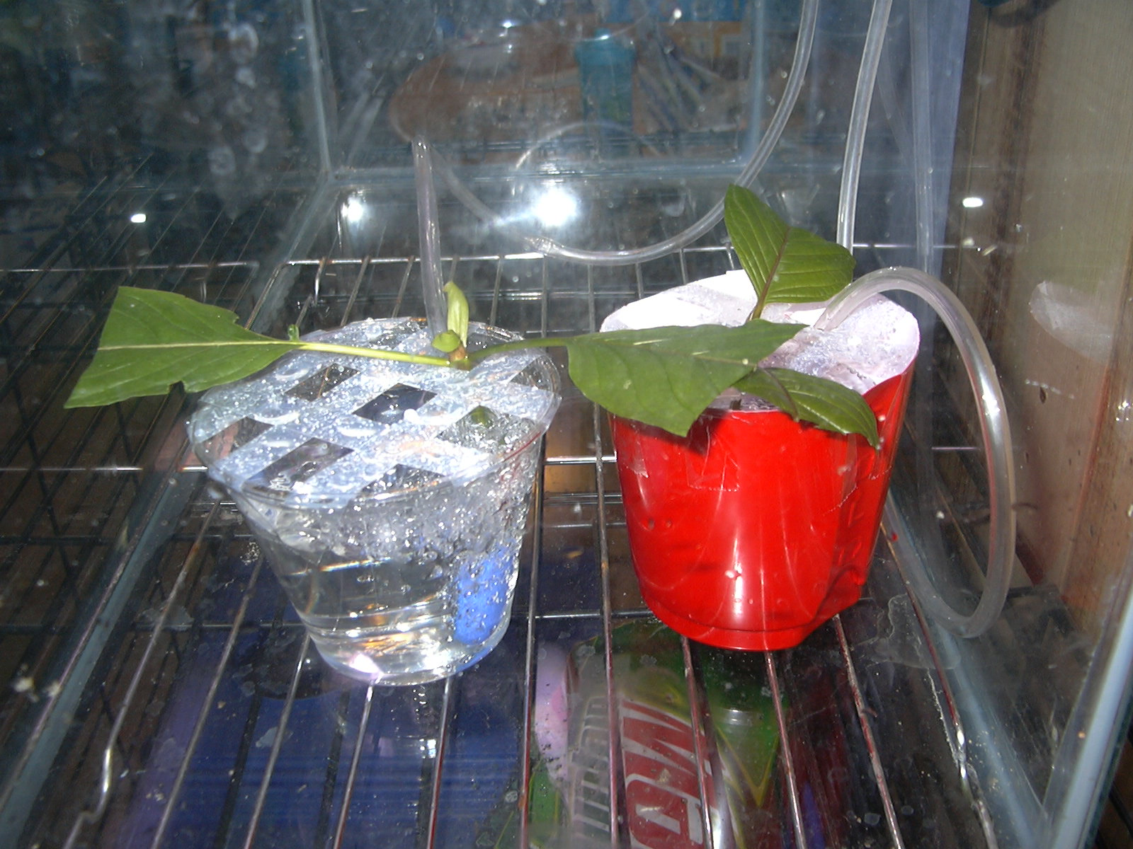 Dirt Cheap Areated Cloning System For Plants
