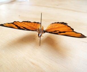 North American Cockerfly