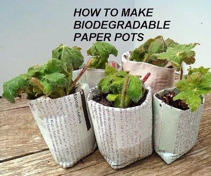 Quick Paper Pots for Transplants or Seedlings