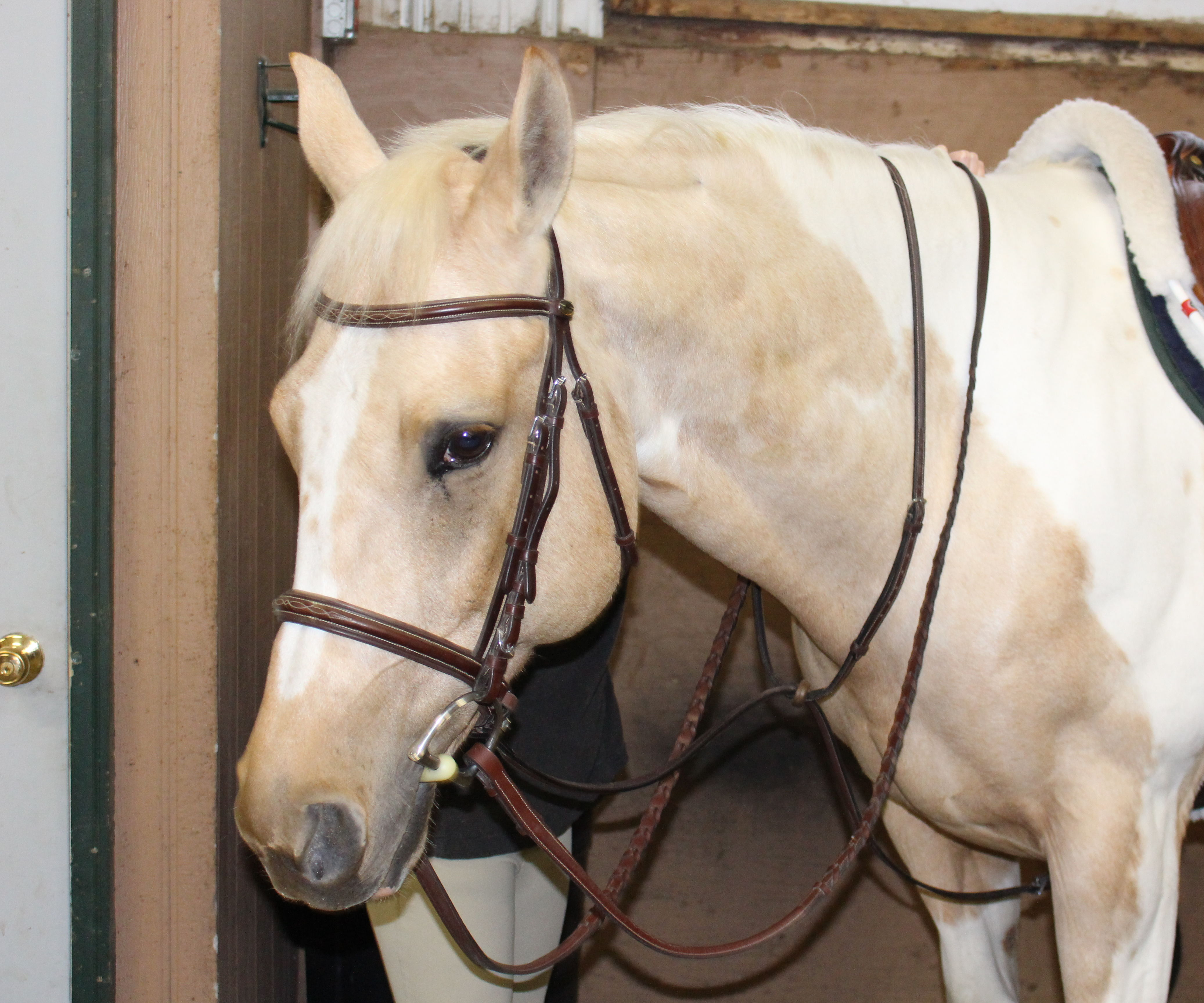 How to Tack Up a Horse for English Riding