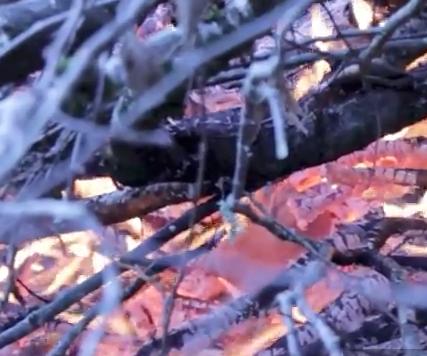 FIRE TEST - GLASS & CERAMICS