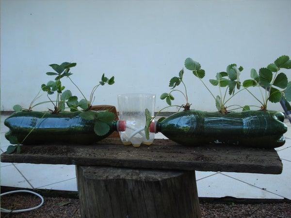 Self Irrigation Flower Cultivation
