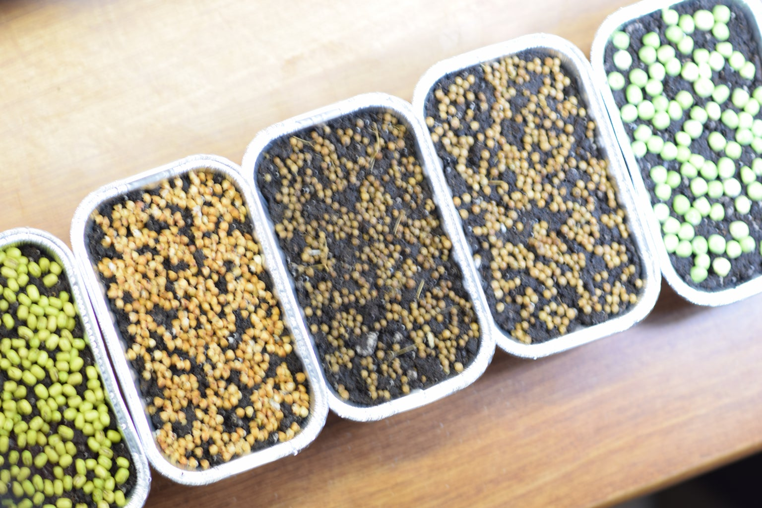 4 Steps and 6 Findings of Indoor Salad Gardening