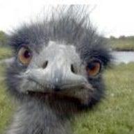 Emu face.jpg