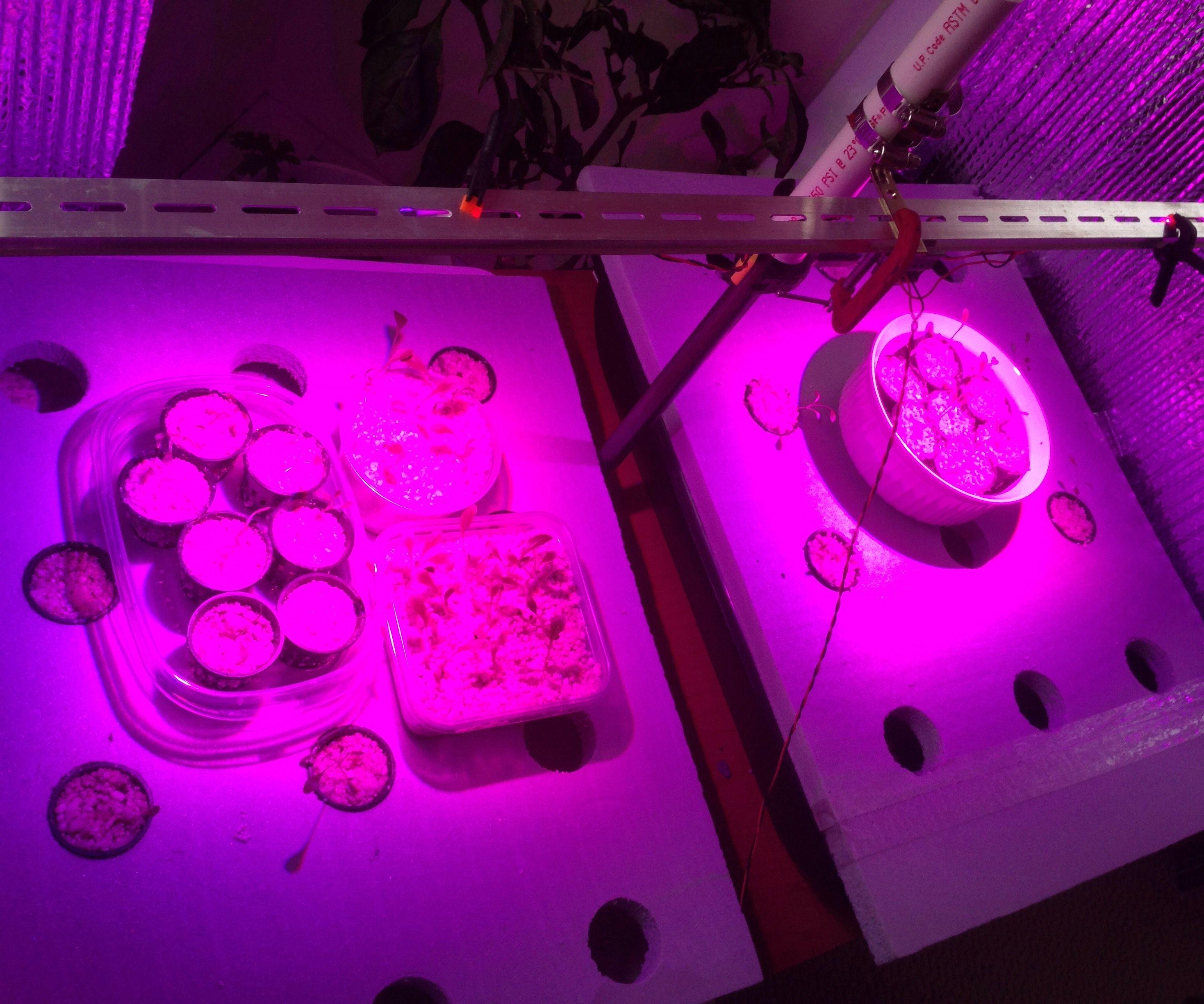 LED Grow Light using Illumitex Surexi F1 LEDs