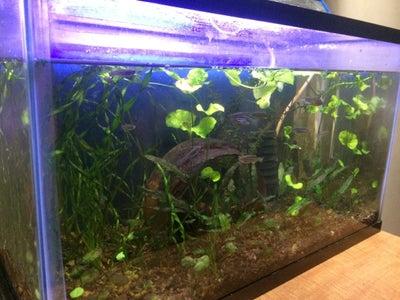 The Fishtank