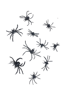Making the Spiders
