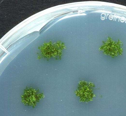Simple Algae Home CO2 Scrubber - Part II Algae Cultures and Breeding