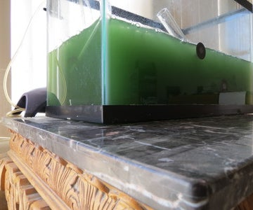 Food of the Future: Window DIY Spirulina Superfood