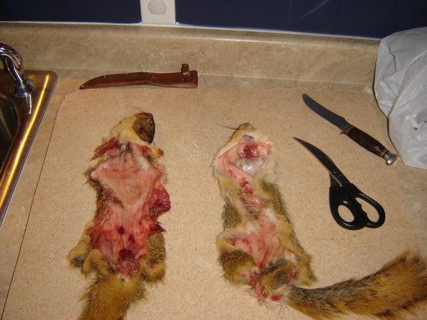 Curing Small Animal Pelts, Squirrels Rabbits Etc..