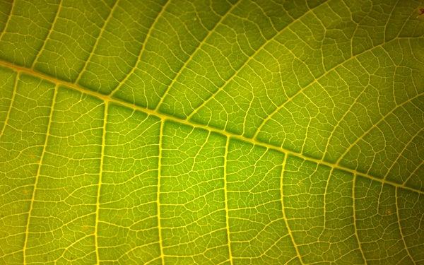Macros of My Garden Shot Via Mobile Phone
