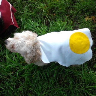 Eggs and Bacon Costume