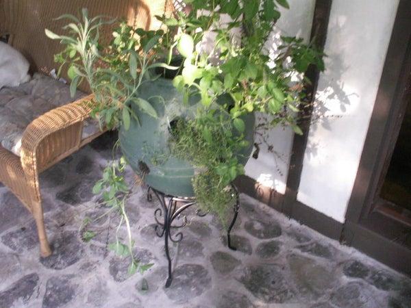 Spice Herb  Ball Planter
