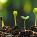 Measuring Soil Moisture With Raspberry Pi 4