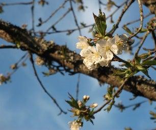 Happy Blossoms