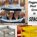Staggered Plant Growth in Space