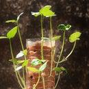Vertical Gardening in a bottle!