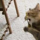 El mejor juguete para gatos del mundo: pescando gatitos
