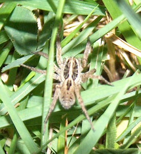 There He Is (or She, I'm Not Much on Spider Knowledge).