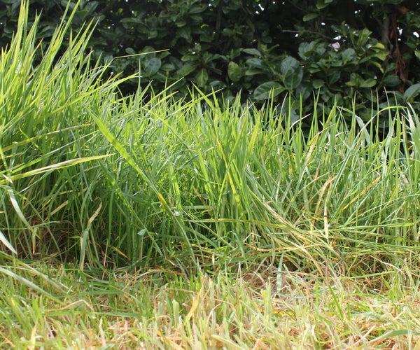 Using a Sickle to Cut Grass. Upcycling the Neighbour's Lawn. Revaloriser La Pelouse Du Voisin. Reciclaje El Césped Del Vecino in HD