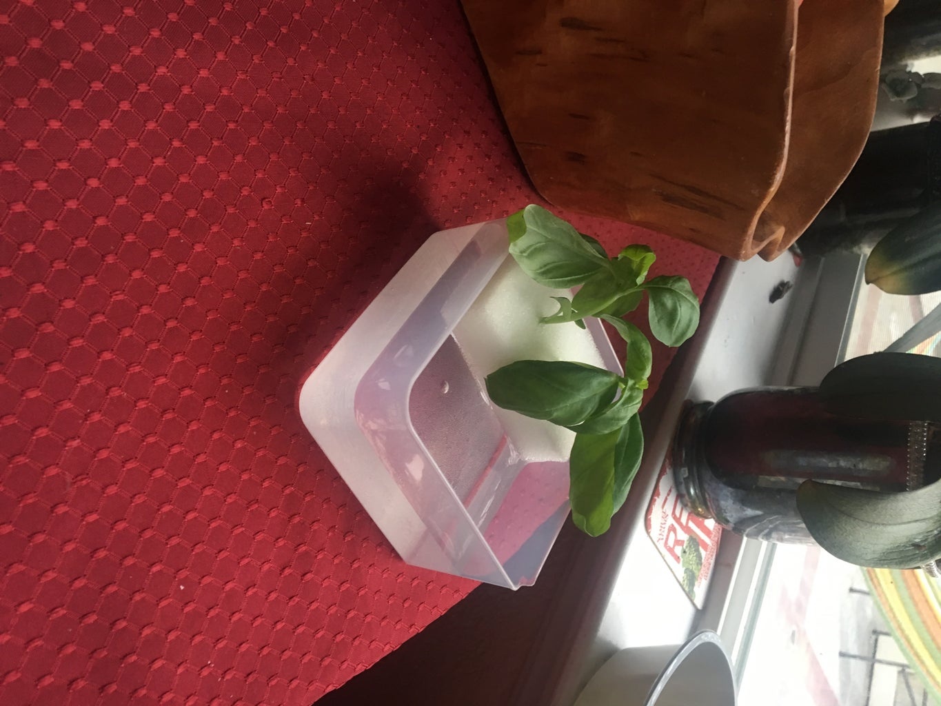 Step 4: Buying a Plant