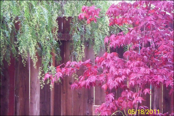 """How to Add """"Instant"""" ********** to Your Garden!"""